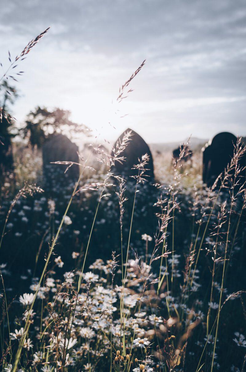 Friedhof im Gegenlicht
