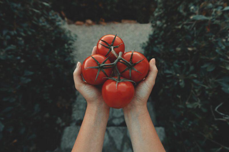 Selbstversorgung_Natur_Landschaft_Nahrungsmittel_Essen_Ernte_Selbsternte_Gesundheit_Nährstoffe_Naehrstoffe_